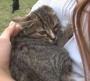 Calcetines y Raspita, dos gatitos de 4 meses en adopción