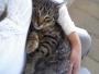 Mango, precioso gatito atigrado **URGENTE** Valencia