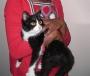 Manu, gatito blanco y negro de 5 meses