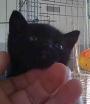 cachita, susi, prixi y max, gatitos de 6 semanas