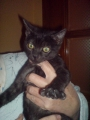 Gatitos de 3,5 meses en adopción