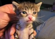 Susanita y Felipe, gatitos de 1 mes en adopción