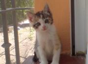 Xena y Kitto gatitos de dos meses en adopción-Sevilla