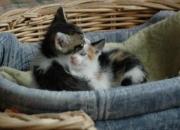 Gatos de todas las edades y colores en adopción