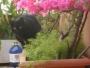 Preciosa gata negra de 3 años busca casa con jardín