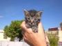 Camada de gatitos en adopción, Barcelona