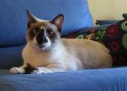 Chiri, precioso y original gatito abandonado