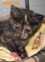 Gitana, preciosa bebé de 4 mesecitos