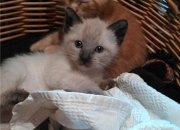 Pini y Pita, 2 preciosos bebés en adopción