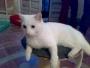 Paco, un amorcito blanco con ojos muy originales