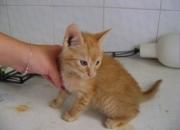 Isidoro, precioso bebé rubito de ojos azules