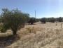 PARCELA 1.900m2 a 58Km MADRID con OLIVOS 30 metros de CARRETERA por 7.000.-?