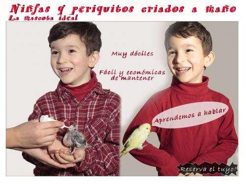Vendo periquitos y ninfas papilleras