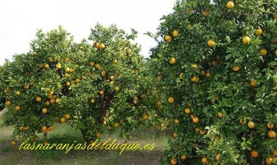 Naranjas - lasnaranjasdelduque.es