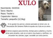 Urge casa de acogida para Xulo